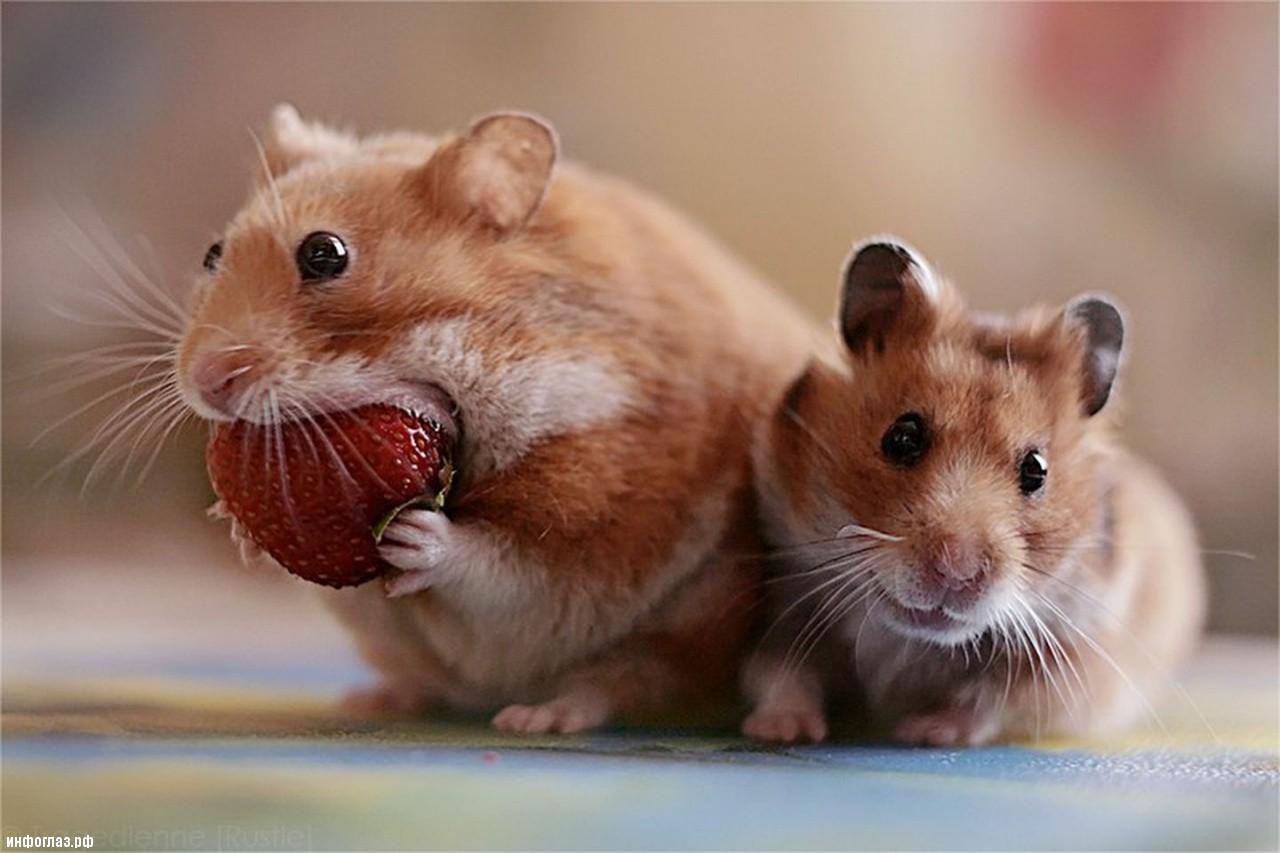 http://infoglaz.ru/wp-content/uploads/2013/03/eating-a-strawberry.jpg