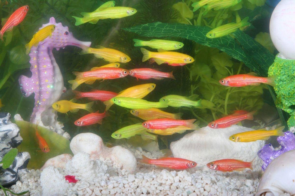 Восстановление спинного мозга с помощью аквариумных рыбок