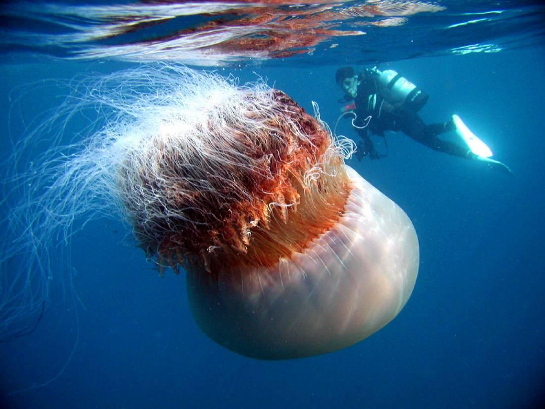 песня медуза медуза мы друзья текст