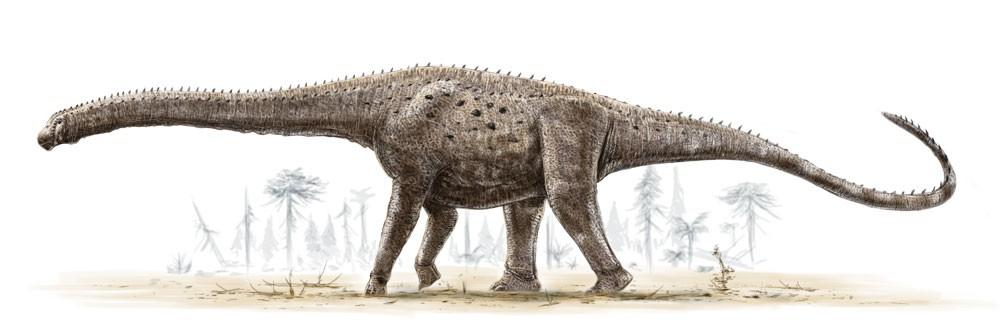 Вопрос о том, какой из сухопутных динозавр может считаться самым большим из известных на...