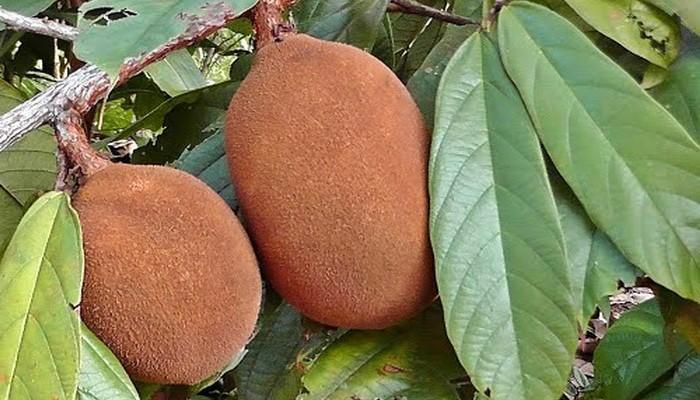 Картинки по запросу купуасу фрукт
