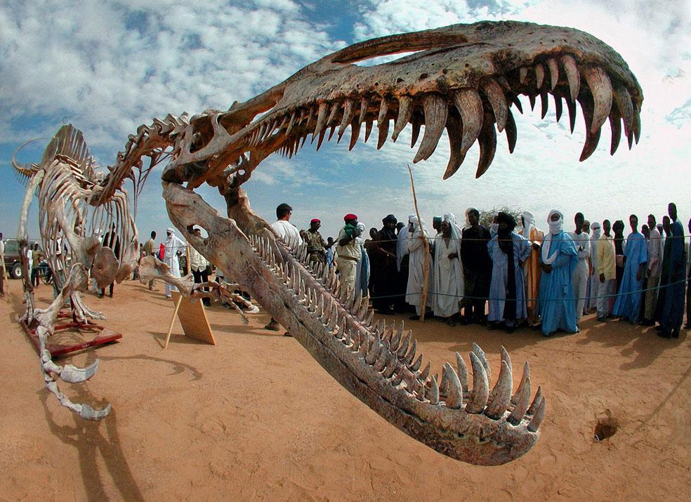 фото динозавров кости