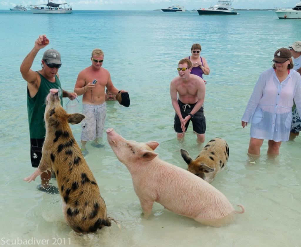 Свиная отбивная «Багама Мама»