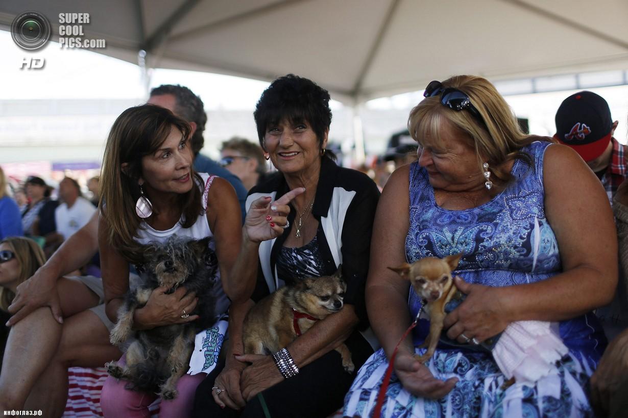 США. Петалума, Калифорния. 20 июня. Участники конкурса «Самая уродливая собака в мире 2014». (REUTERS/Stephen Lam)